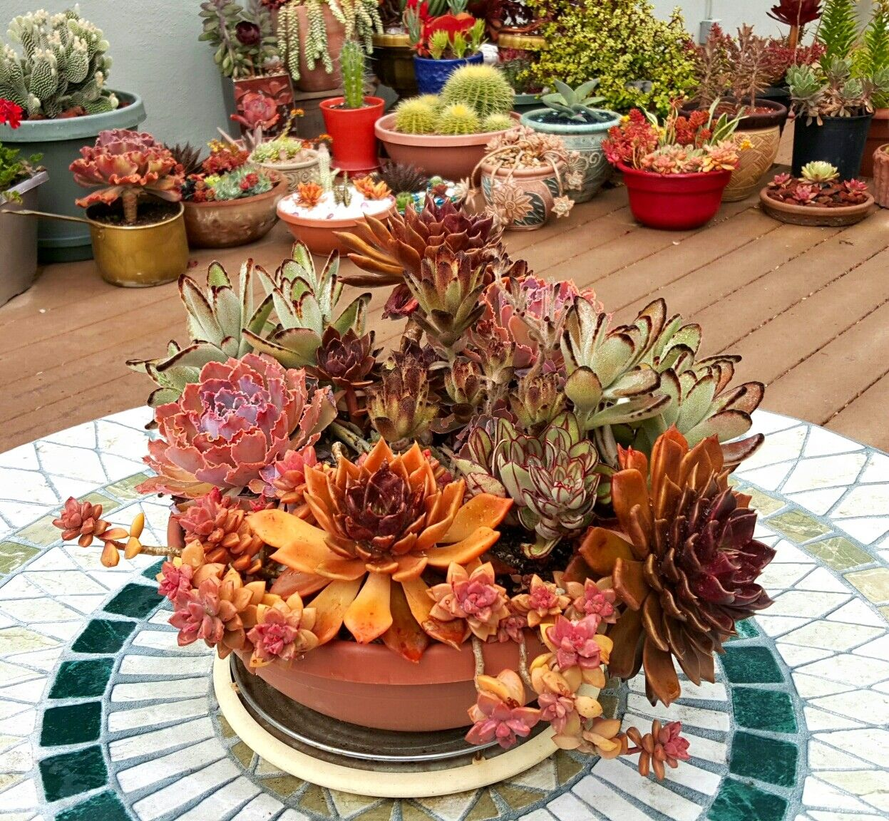 Colorful succulent arrangement from Bruce Wuorenmaa