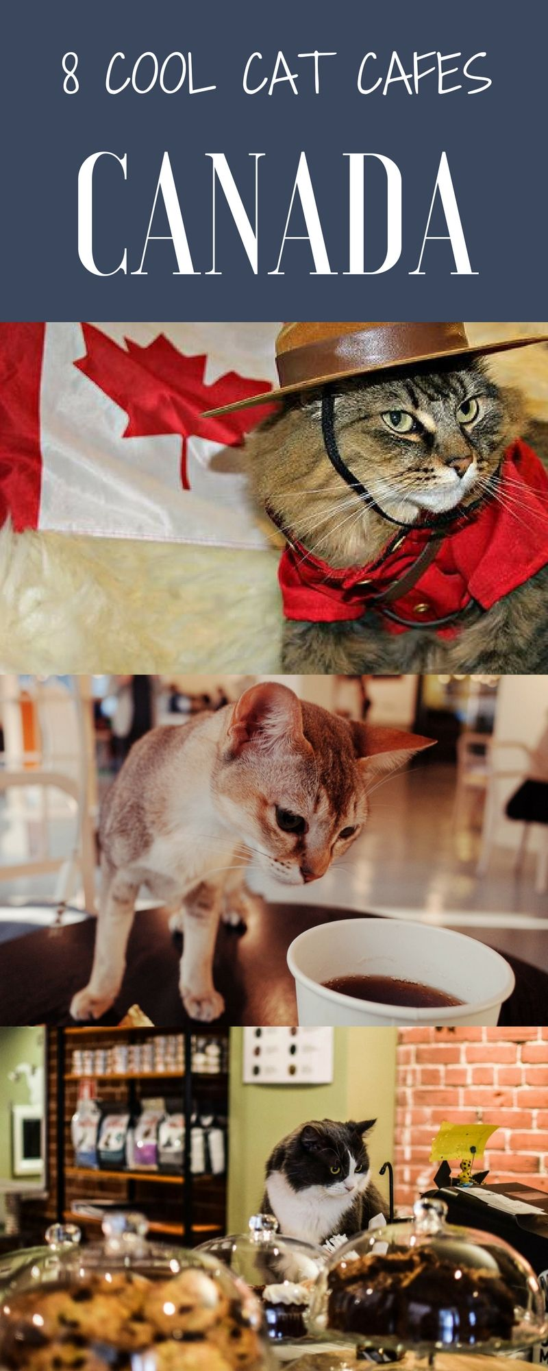 Cool Cat Cafes in Canada Cat cafe, Canada travel, Cool cats
