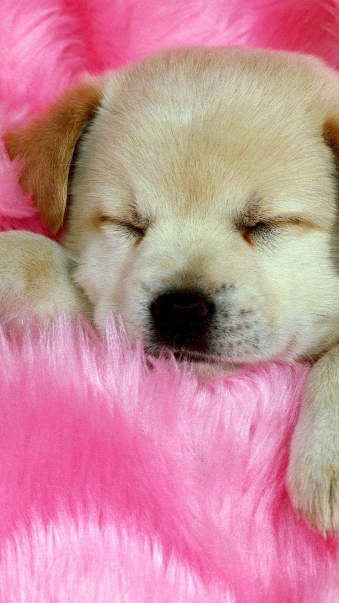 Puppies Phone Backgrounds Best Hd Wallpapers Cute Puppy Wallpaper Dog Background Cute Animals