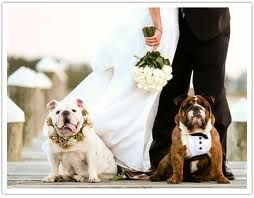 Google Image Result for http://aisle-candy.com/blog/wp-content/uploads/2010/10/bulldogs-in-wedding.jpg