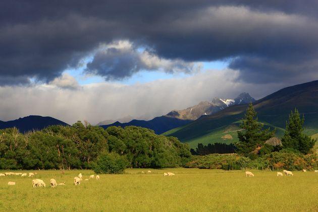 Video Nouvelle Zelande Gallery: NOUVELLE ZELANDE
