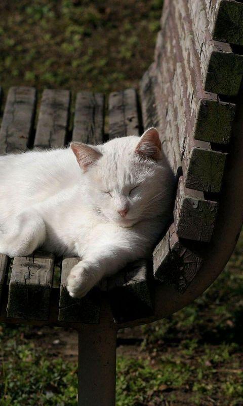 480x800 Wallpaper cat, bench, lie, light