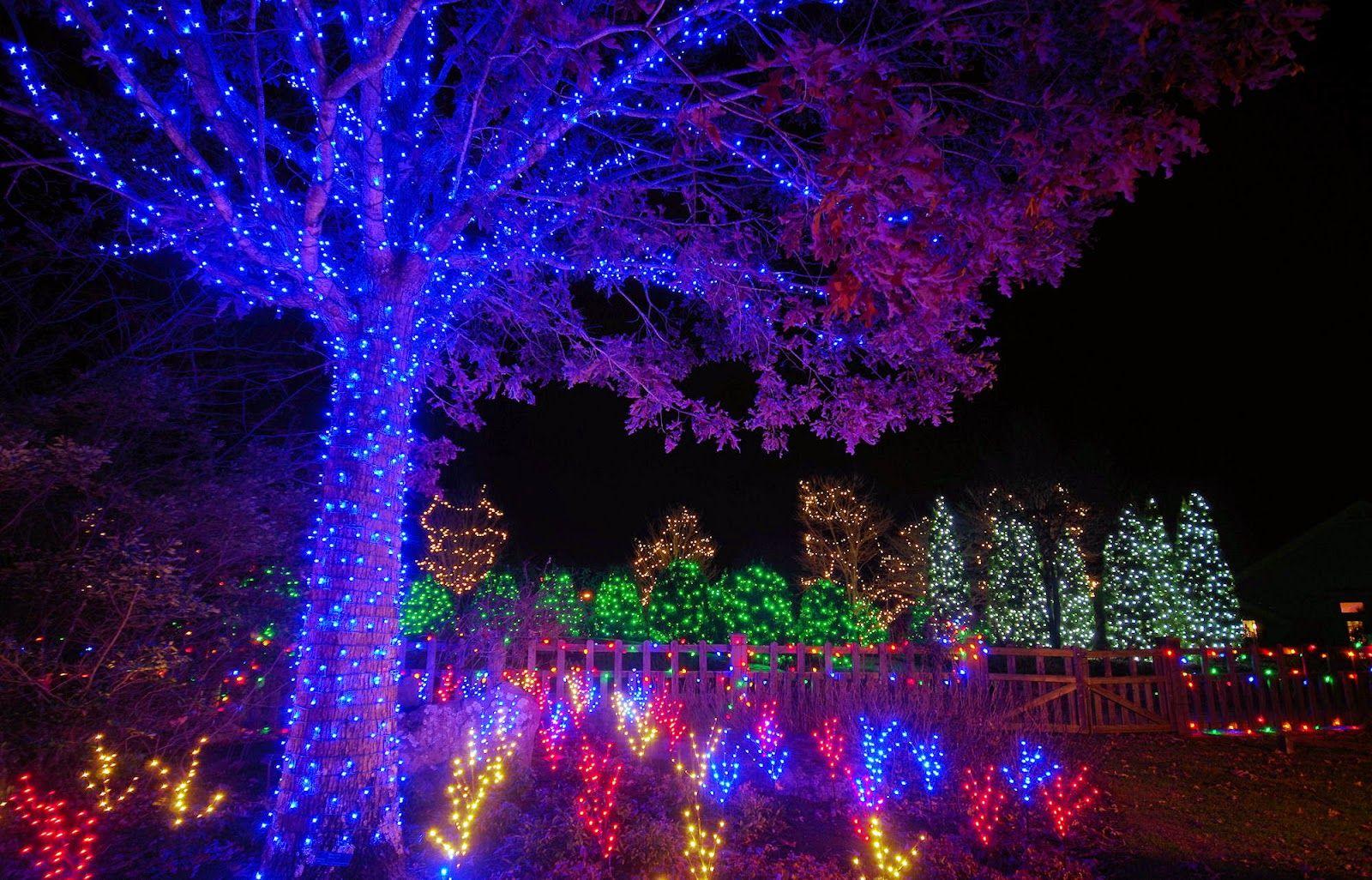Winter Lights Dazzle the N.C. Arboretum | Winter light, Nc ...