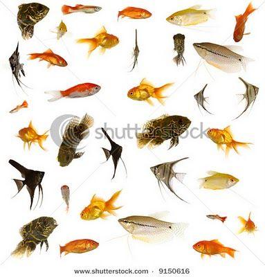 Learning-to-cook: Fish Names in English - Tamil - Telugu - Malayalam
