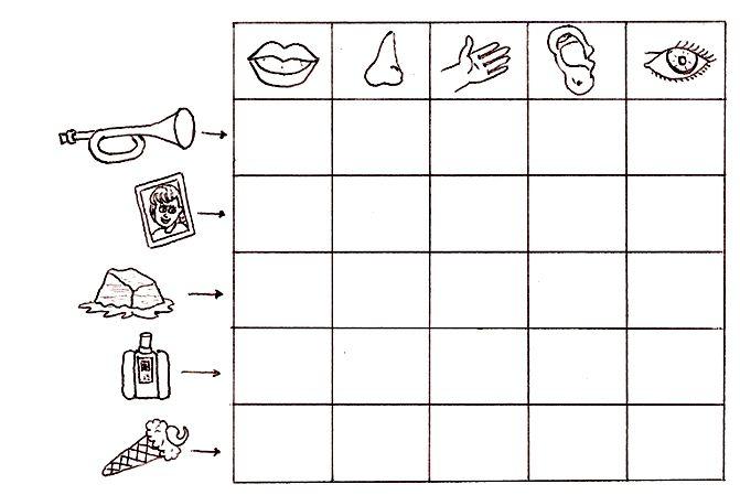 Actividades para nios preescolares con los 5 sentidos Imagui