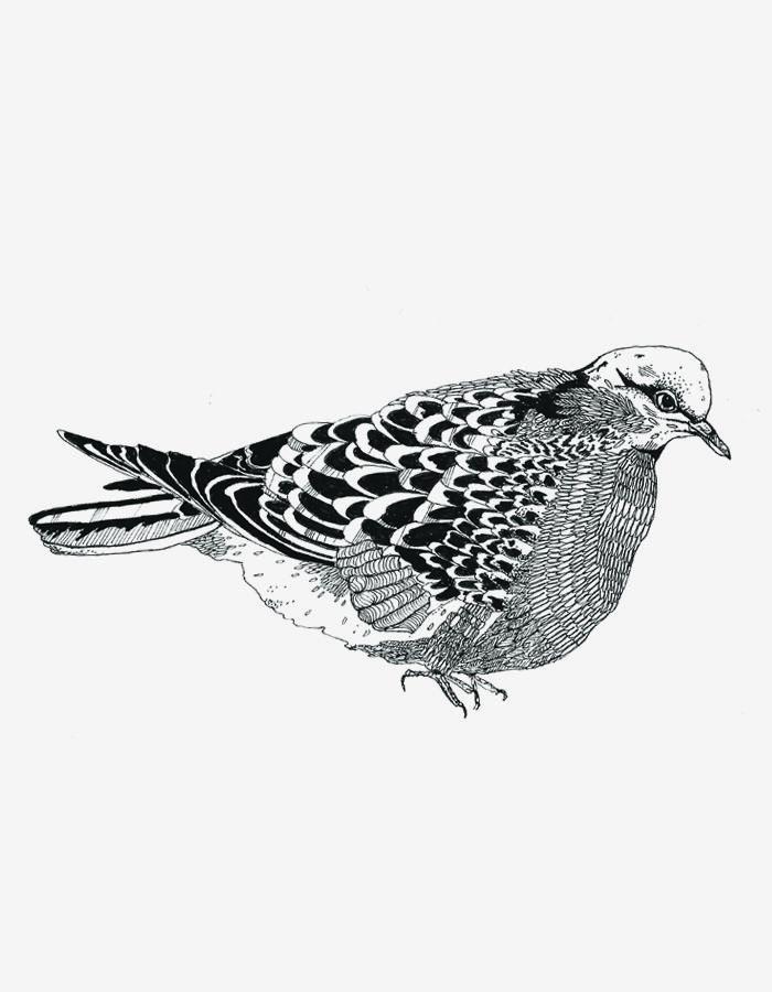 Chrysa Koukoura Project Pigeon Pinterest Dessin Art Inuit And