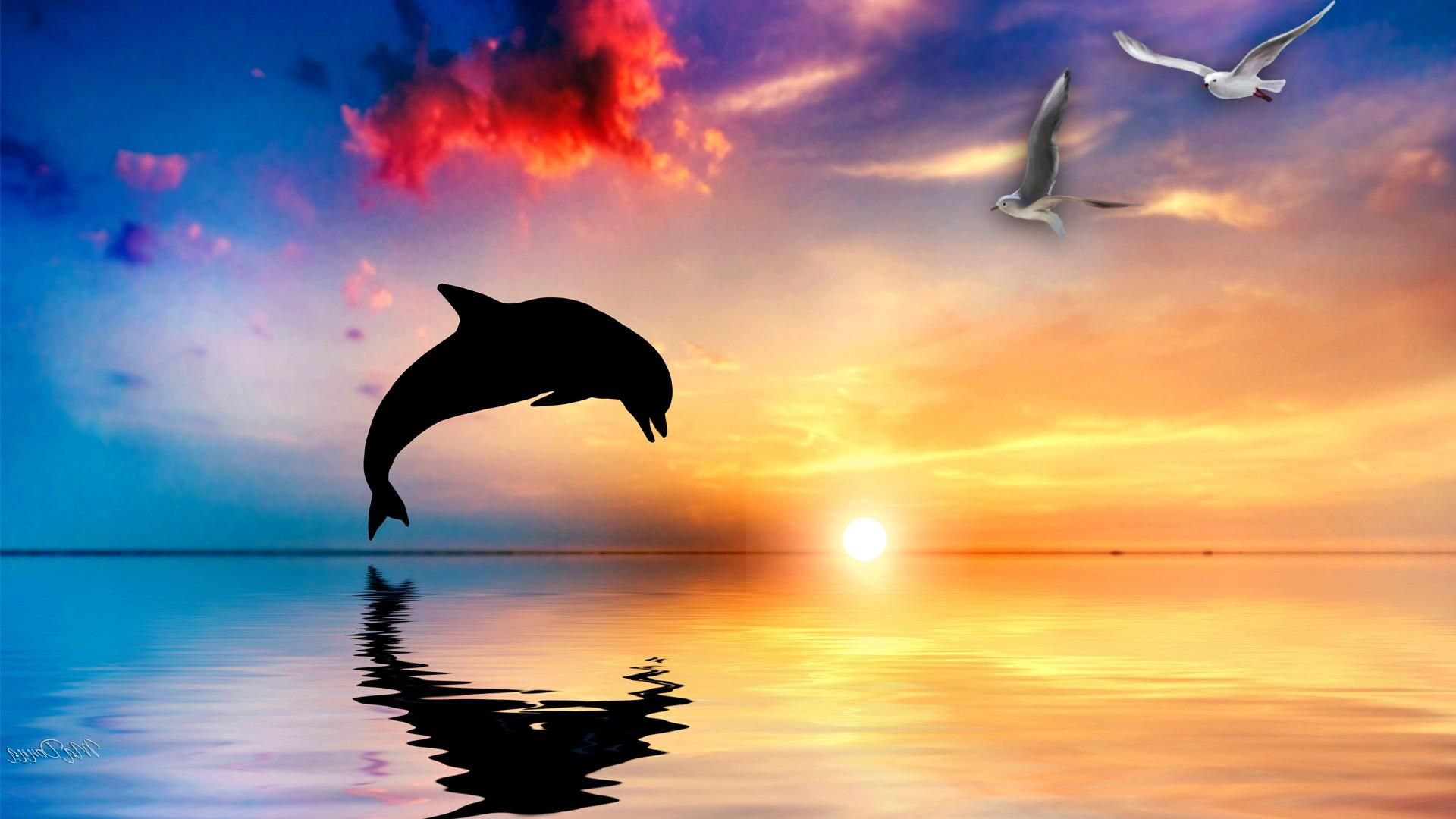 Wallpapers Of Dolphins Wallpaper
