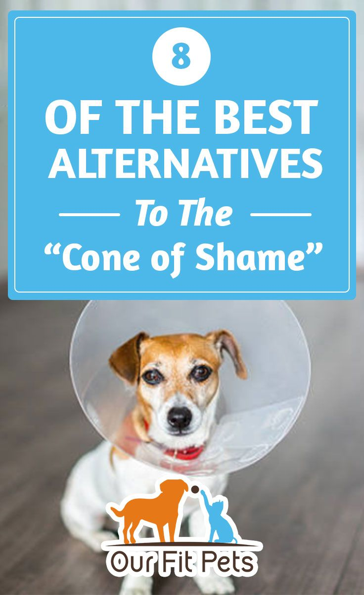 8 of the best alternatives to the cone of shame dog