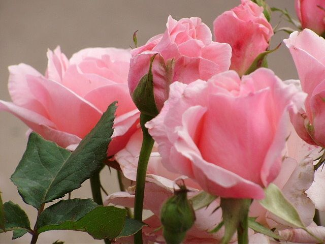 Картинка с днем рождения розалина, киндерами