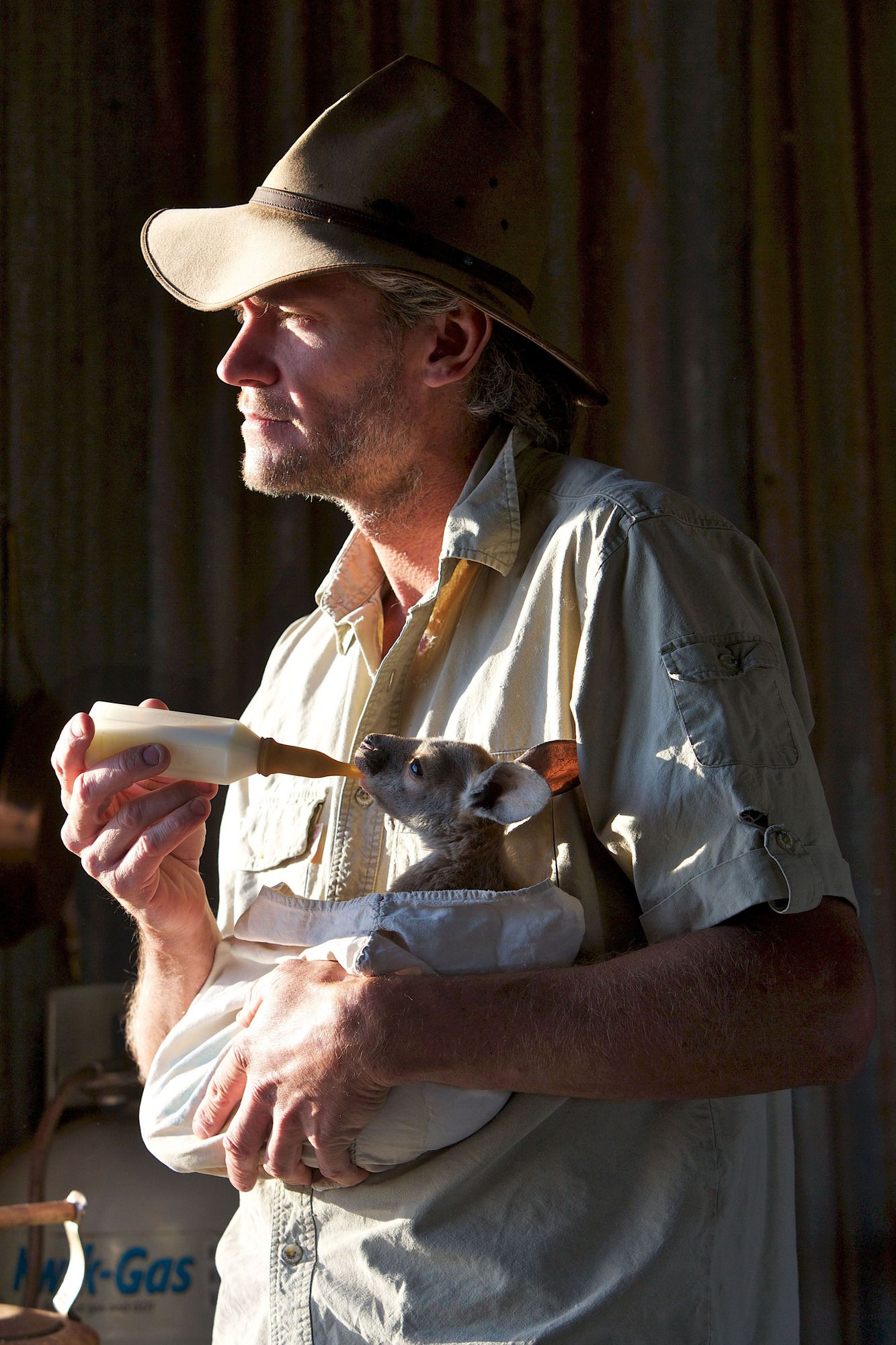 Kangaroo Dundee: Meet a man who lives all on his own in the bush with 'roos