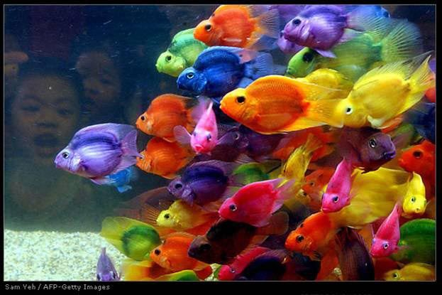 Emailed Photos Parrot Fish Colorful Fish Rainbow Fish