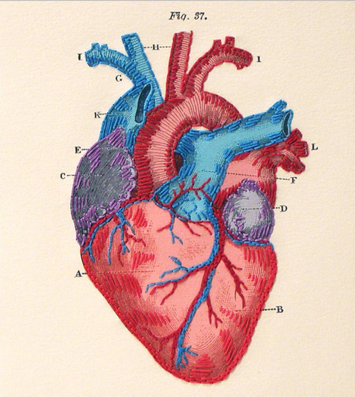 Cat Heart Anatomy - Anatomy Drawing Diagram