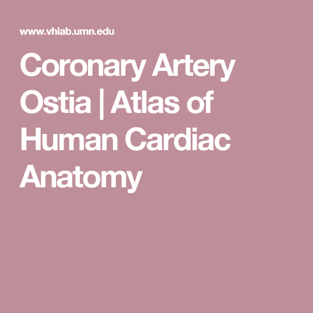 Coronary Artery Ostia Atlas Of Human Cardiac Anatomy