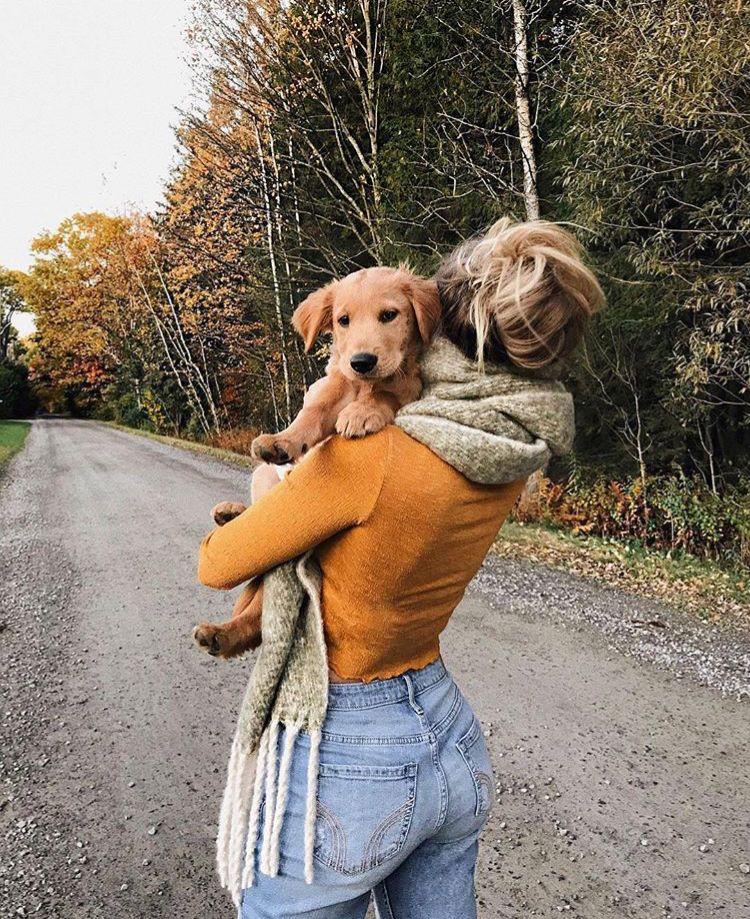 Создать картинки с собаками