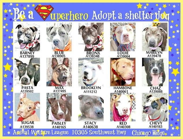 In Chicago Please Adopt With Images Shelter Dogs Animals Pets