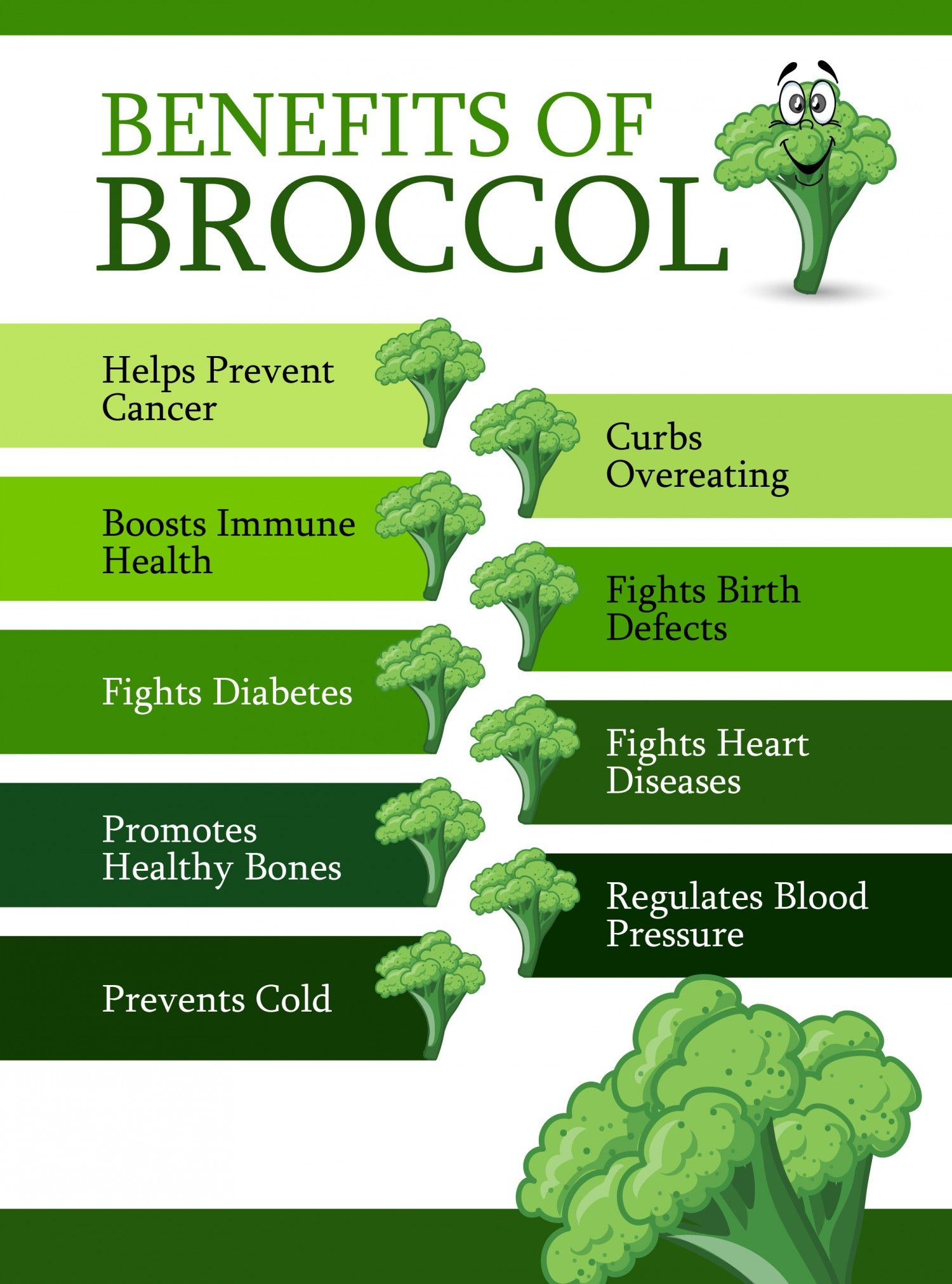 Broccoli - the beneficial properties of royal cabbage 63