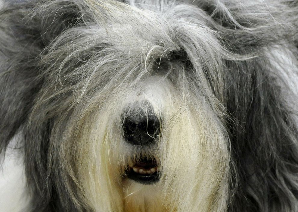 Best Of The Best 135th Westminster Kennel Club Dog Show