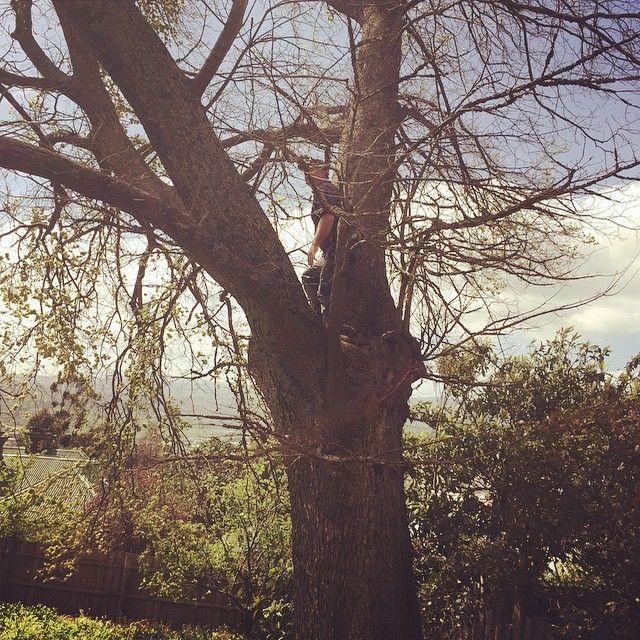 Tree inspection. #argylestreet #englishelm #treeinspection #arbirist #argyle #argylewest  by dean_harper