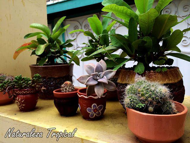 Colección de plantas en terraza pequeña | La Eslovena | Pinterest ...