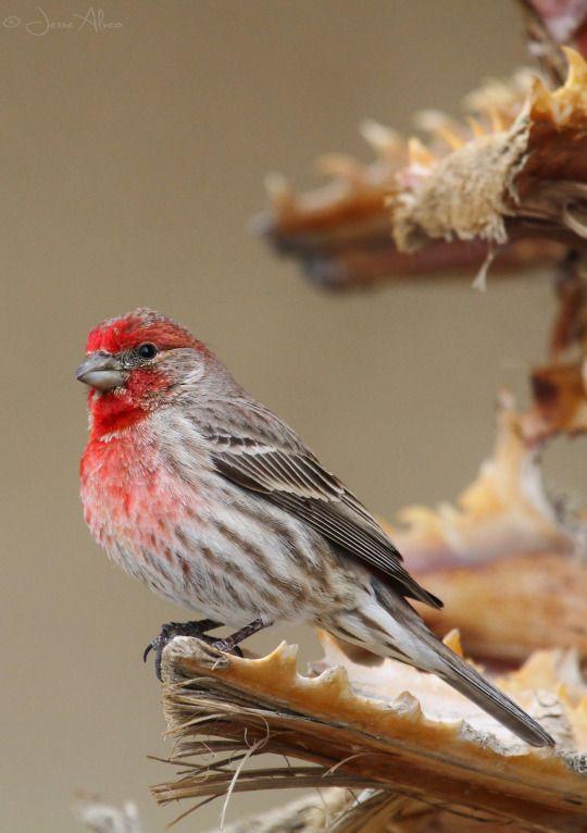 ORIGINAL BIRD PHOTOGRAPHY BY J. ALVEO