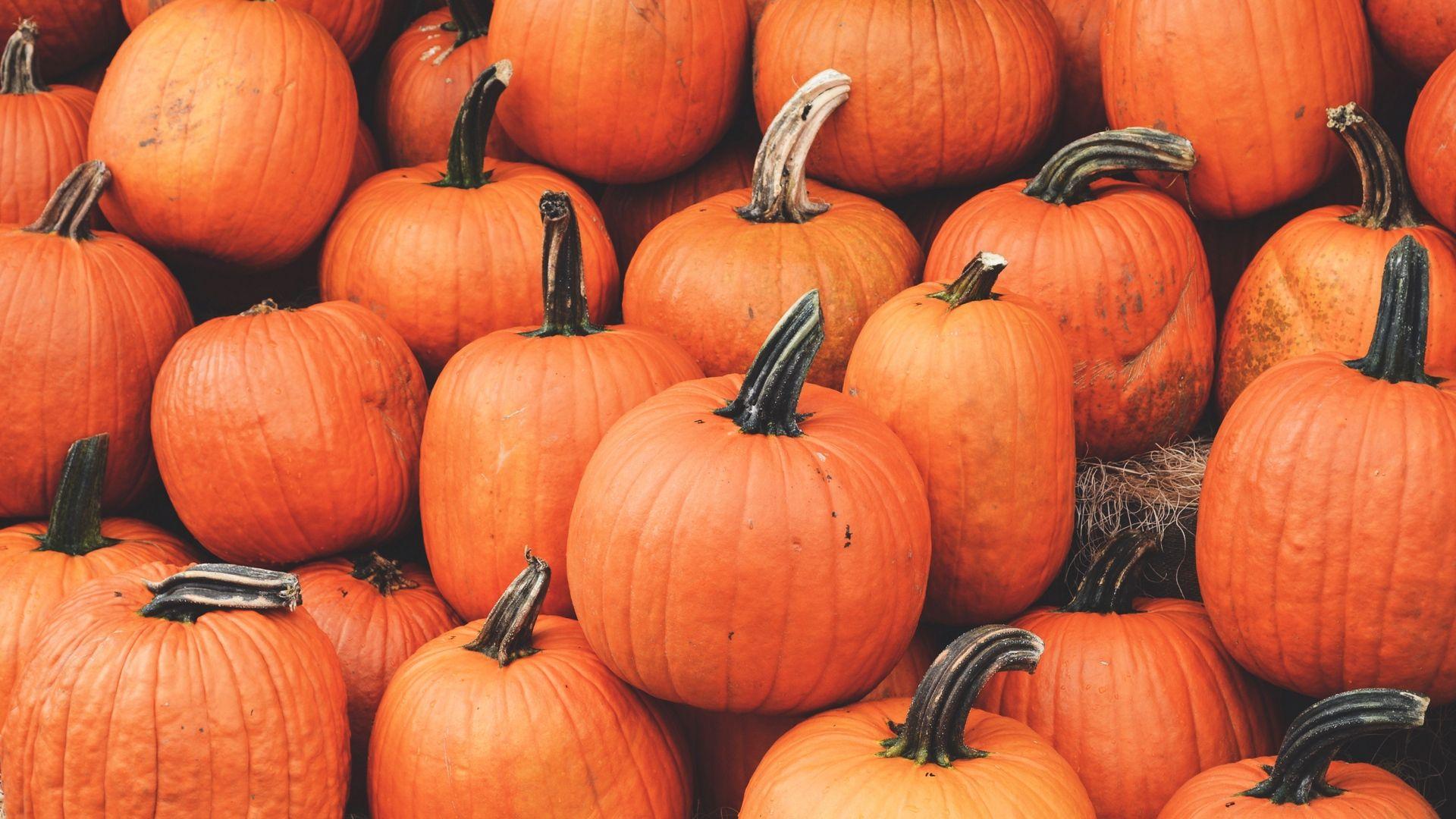 1920x1080 Wallpaper Pumpkin Harvest Autumn Ripe October Ernte Desktop Hintergrund Herbst