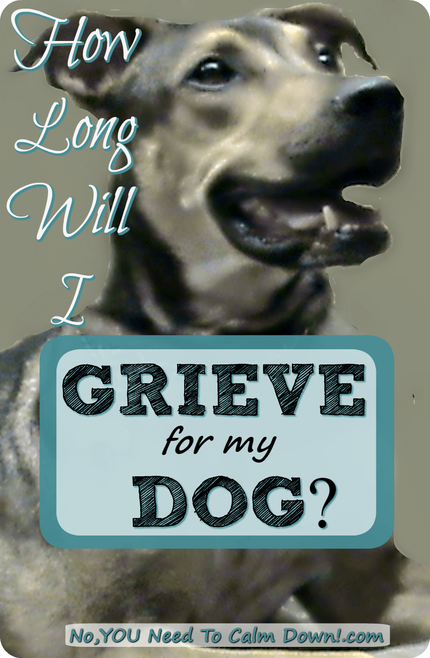 How To Get Over Grieving The Loss Of A Pet