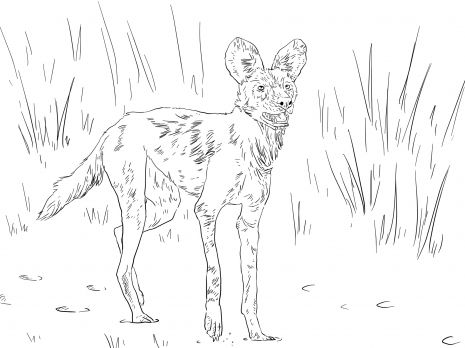 African Wild Dog Painted Or Cape Hunting Somtimes Called An