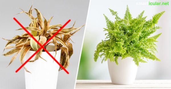 f r alle ohne gr nen daumen robuste pflegeleichte zimmerpflanzen zimmerpflanzen pflanzen. Black Bedroom Furniture Sets. Home Design Ideas