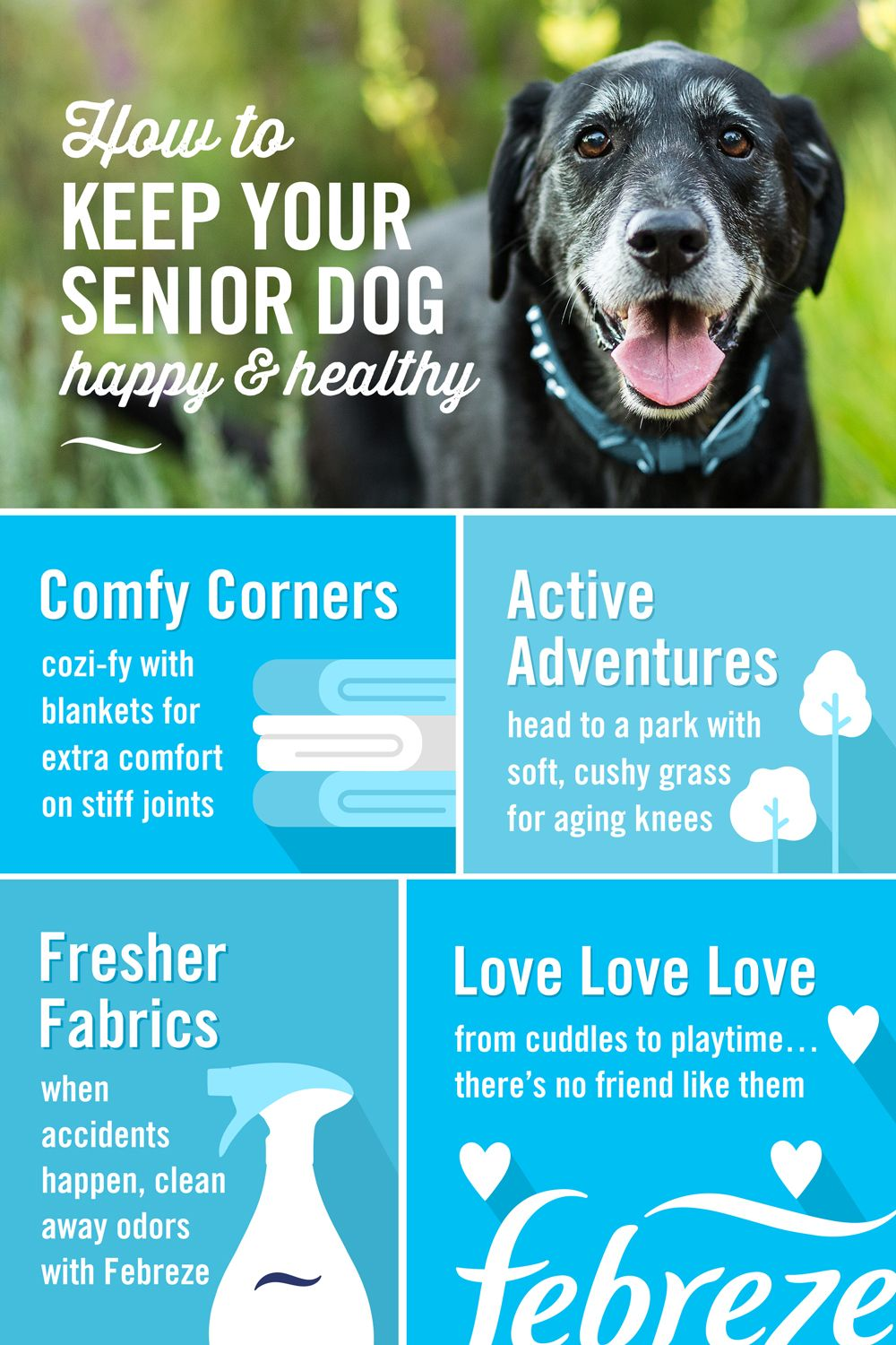 Pin By Roxanne On Oscar Easy Pets Pet Care Tips Old Dogs