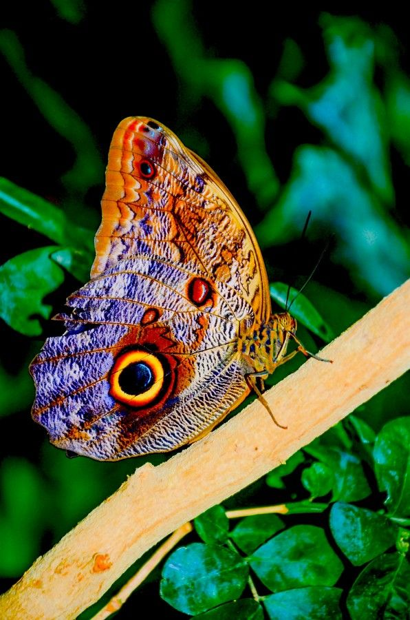 Butterfly by chris taylor on 500px krabbeln und fliegen for Kleine fliegen blumen