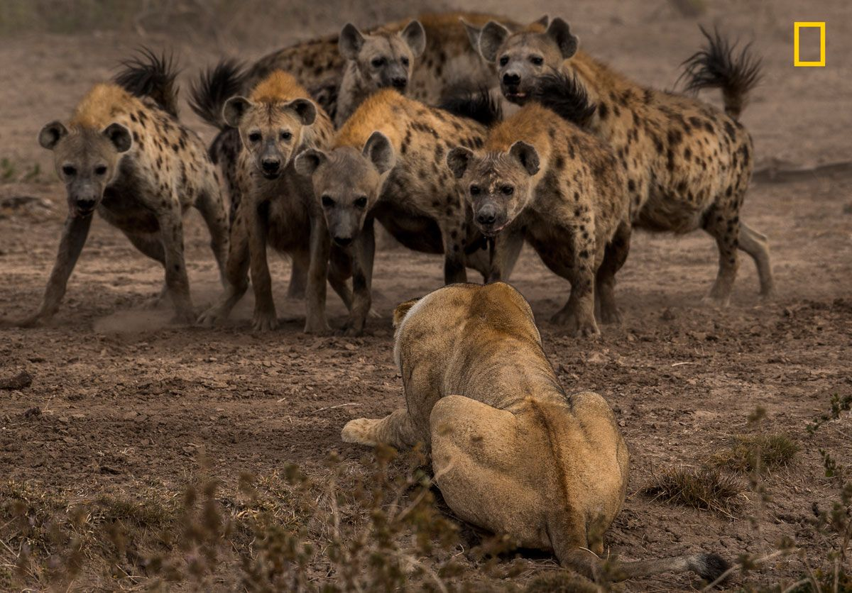 National Geographic Nature Photographer Of The Year 2017 18 Standouts From The 2017 Nat Geo Nature Photographer Of The Year Contest With Images Hyena Animals Beautiful Nature Photographs