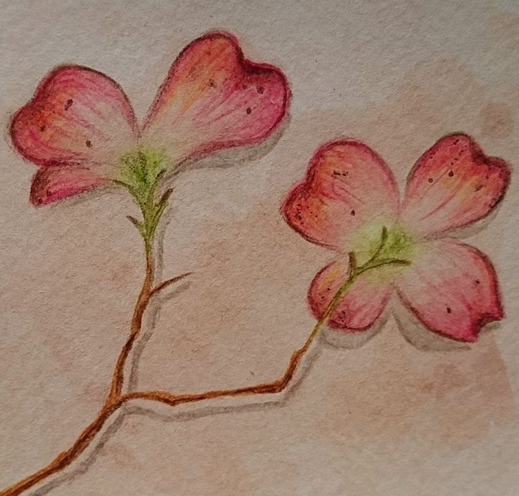 تعليم الرسم كيف ترسم وردة بالوان الخشب المائية ورود رسم الوان خشب طبيعه Painting Art Instagram