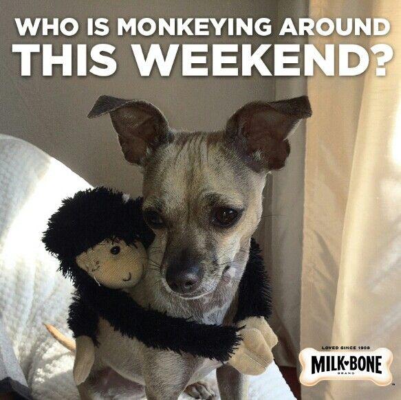 Monkeying around???? :)
