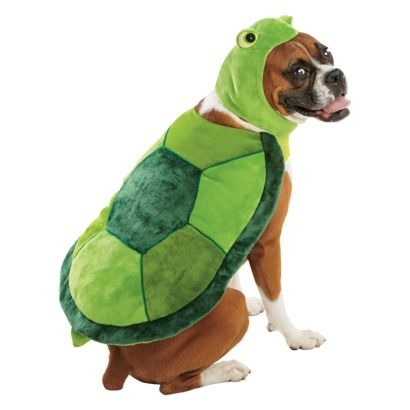 This Could Be A Teenage Mutant Ninja Turtle Costume So Easily