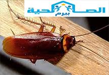 شركه مكافحه الصراصير فى المذنب شركه مكافحه الصراصير فى المذنب نعلم ان الحشرات من أكثر الكائنات ازعاجا على ا Best Pest Control Insect Control Roach Infestation