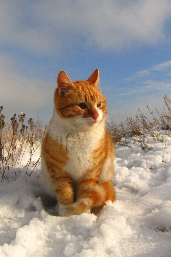 """""""Cats are smarter than dogs.  You can't get 8 cats to pull a sled through the snow."""" --Jeff Valdez"""