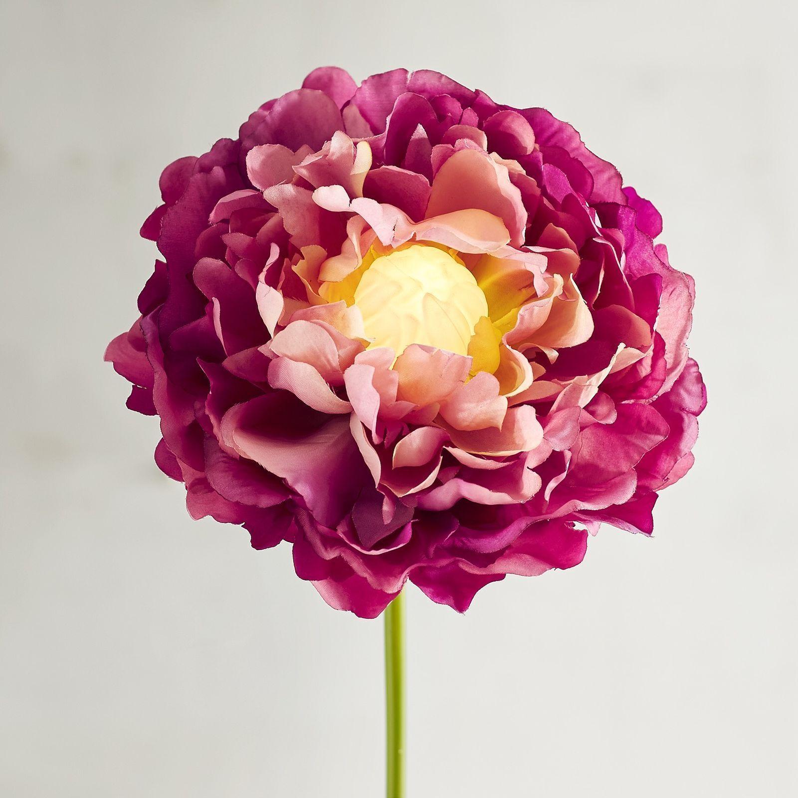 Led Light Up Long Stem Flower Collection My Pinterest Likes