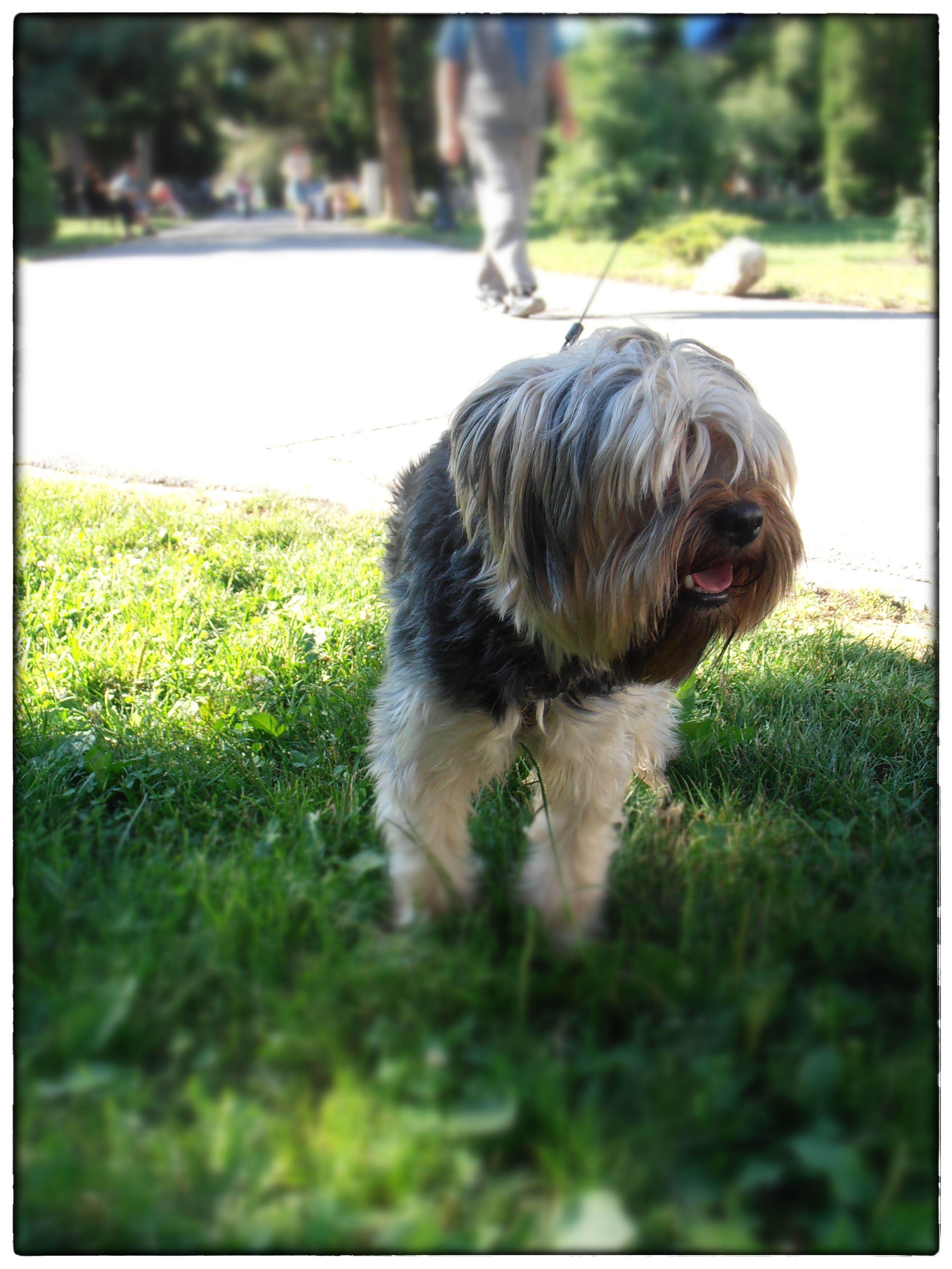 bfcfaa2c12ba Dang this dog looks just like benji