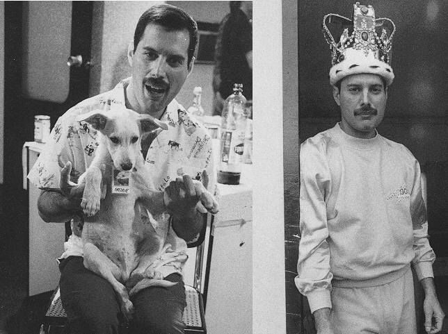 Freddie Mercury & Queen Photos. (con immagini) Freddie