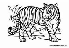 Tigre Da Colorare Risultati Yahoo Search Results Yahoo