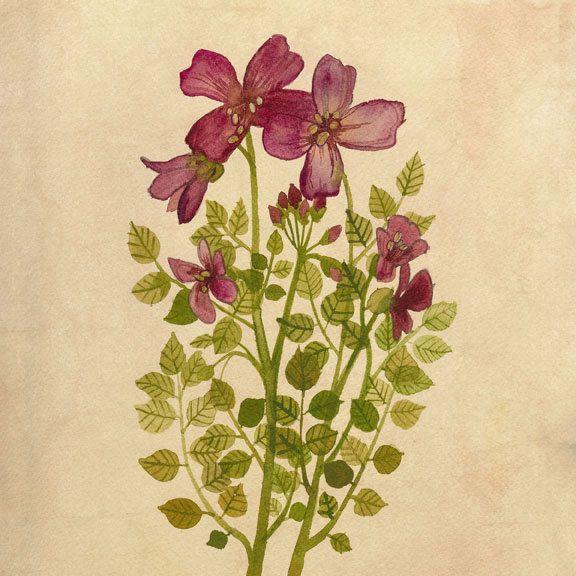 Purple Flowers Print 8\
