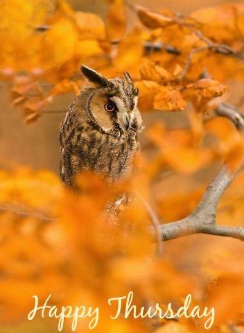 """Résultat de recherche d'images pour """"happy thursday autumn animal pictures"""""""