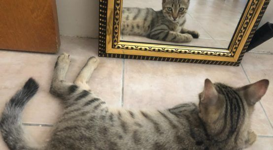 Cats reflect personality, just like children with her …