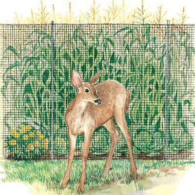 Deer Fencing - Greenscapes 7' x 100' Wildlife Netting - Sold at Menards for $12.47 each