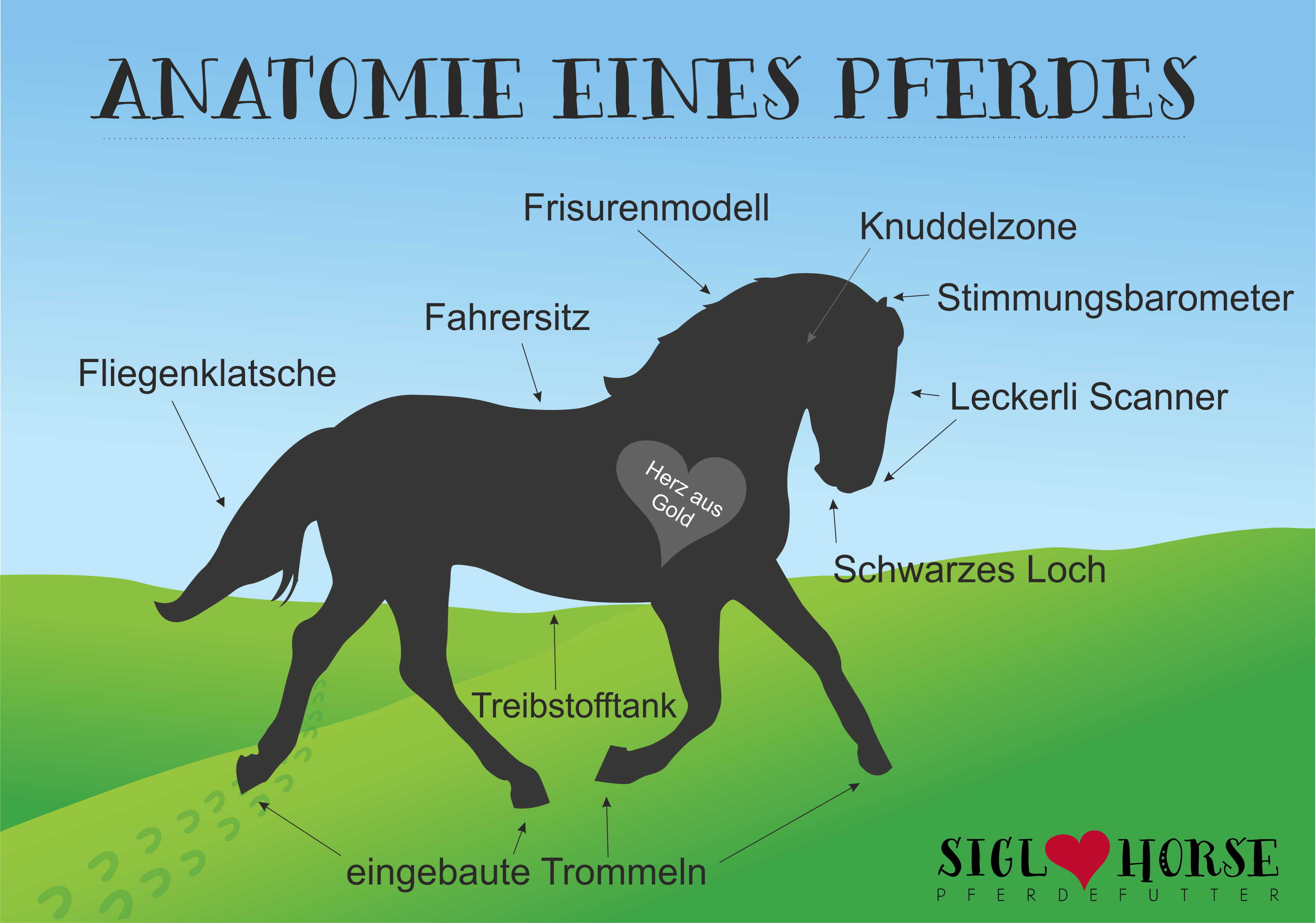 Anatomie eines Pferdes #Pferd #Pferdehumor | Pferde ♡ | Pinterest ...