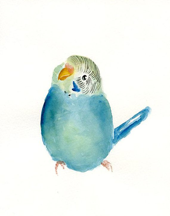 Budgie By Dimdi Original Watercolor Painting 8x10inchxxxxall The