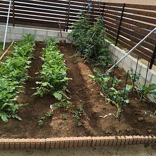 家庭菜園 畑 庭のインテリア実例 2017 09 23 09 21 07 Roomclip ルームクリップ 庭 家庭菜園 庭 Diy