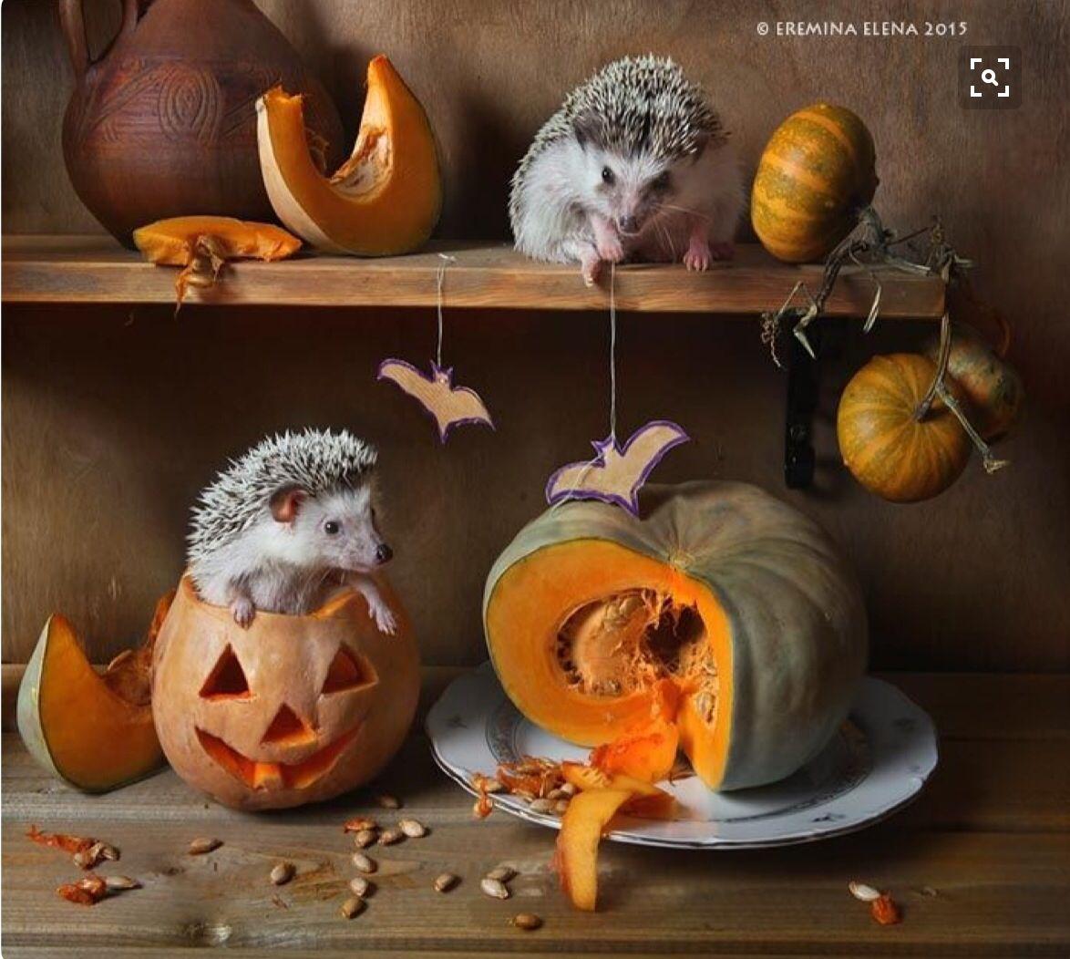 Deja que el otoño te sorprenda!