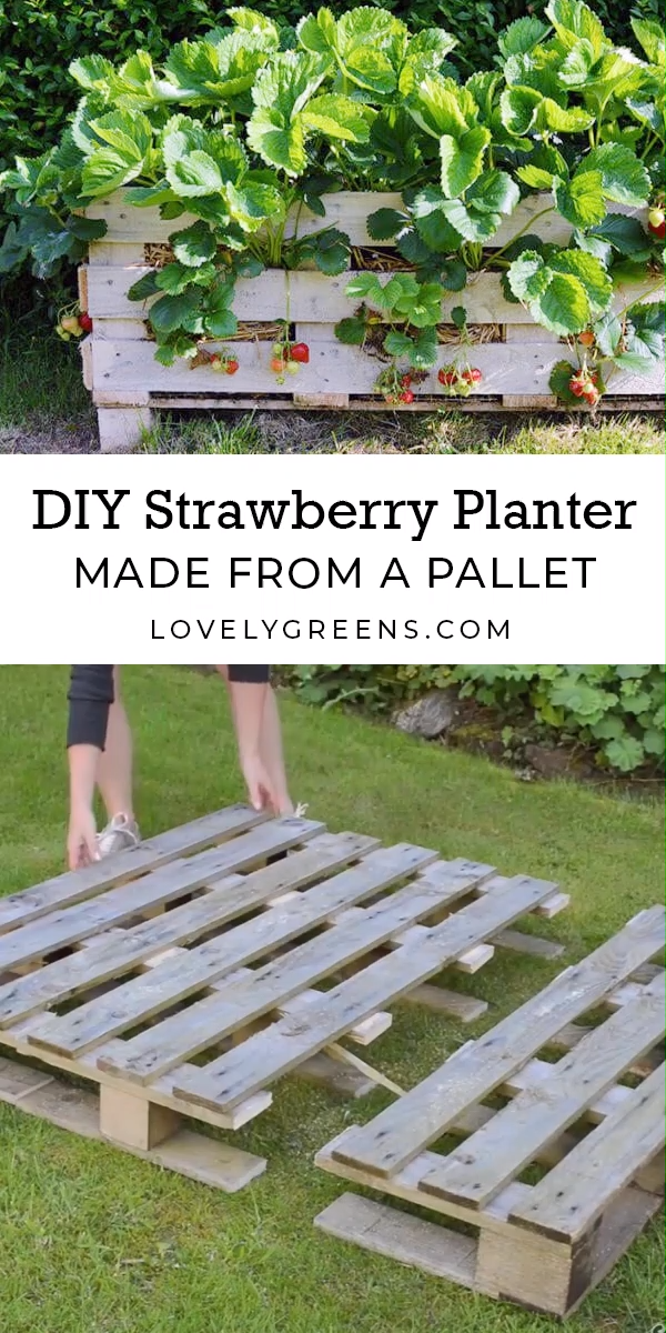 How to Make a Better Strawberry Pallet Planter is part of Vegetable garden design, Pallets garden, Veggie garden, Strawberry planters, Veg garden, Raised garden - How to Make a Better Strawberry Planter using Pallet Wood