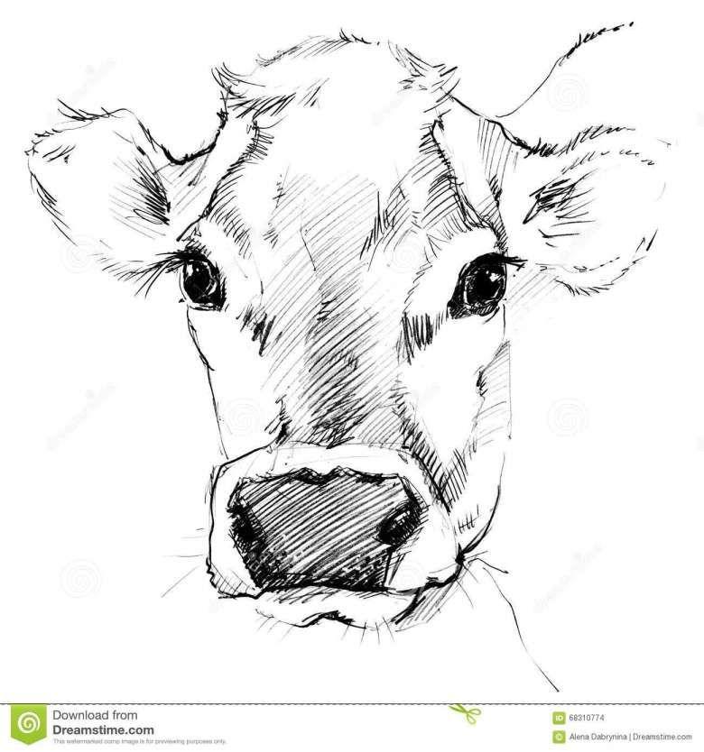 16 Cow Face Drawing Dengan Gambar Drawing Pensil Babi